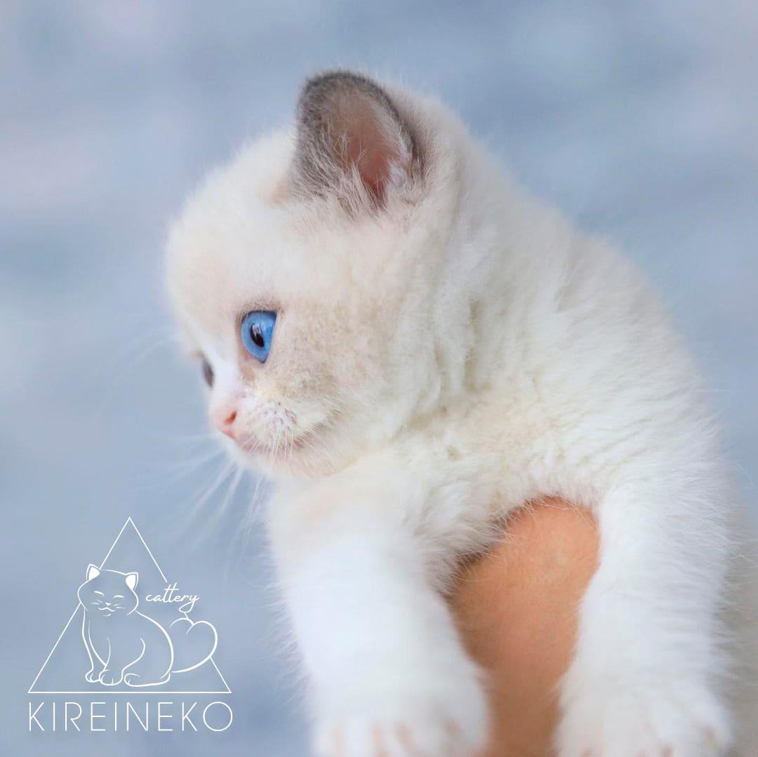 водный знак на фото для питомника кошек с логотипом