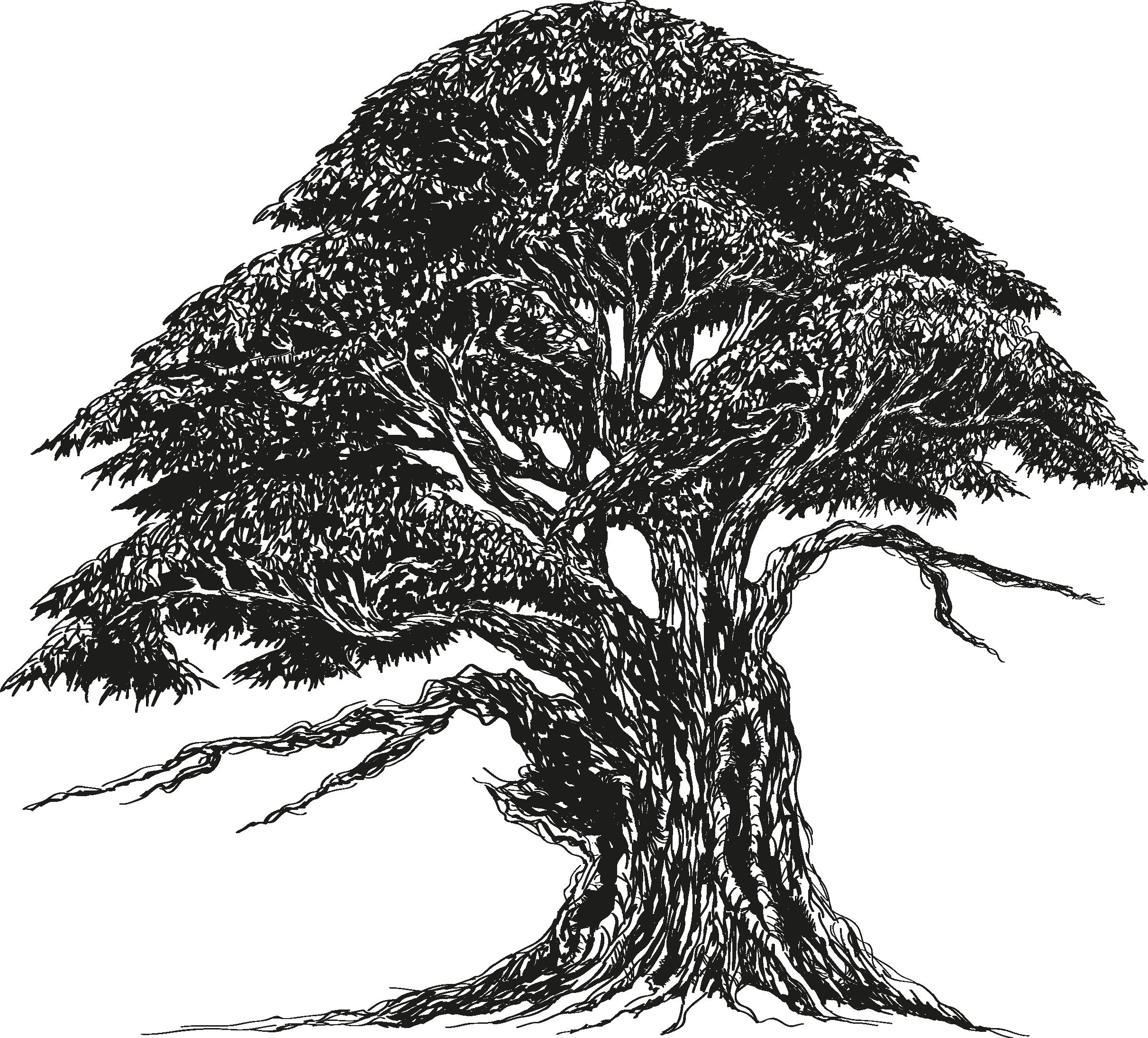 иллюстрация в векторе дуб дерево