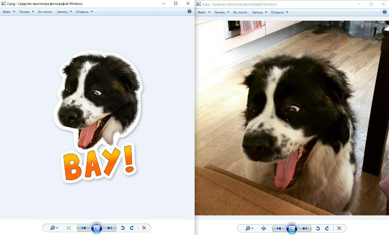 рисунок собаки по фотографии