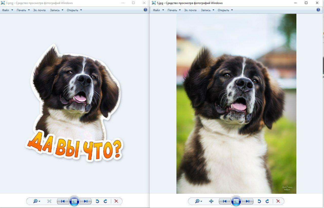 иллюстрации собак по фотографии